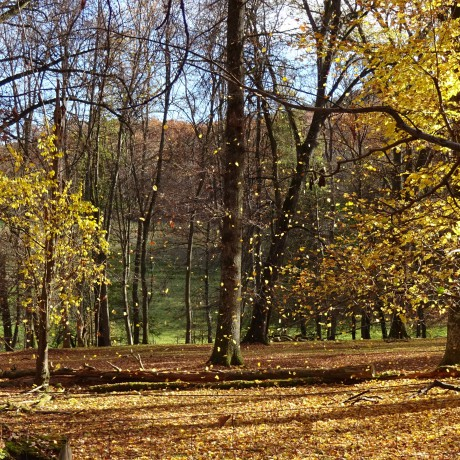 Fallende Blätter - den richtigen Augenblick festhalten © Bürodienste-in