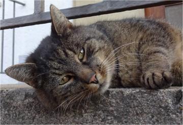 Die Katze vom Dienst  © Bürodienste-in