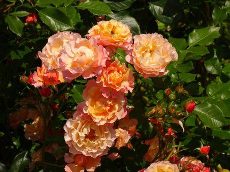 Farben – Balsam für die Seele © Bürodienste-in