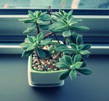 Pflanzen für gutes Raumklima